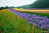 2014北海道:DSC_1777.jpg