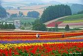 2014北海道:DSC_1711.jpg