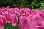 春之饗宴~2013梅峰農場~:DSC_8344.jpg