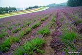 2014北海道:DSC_1752.jpg