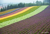 2014北海道:DSC_1751.jpg