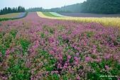 2014北海道:DSC_1769.jpg