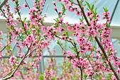 春之饗宴~2013梅峰農場~:DSC_8430.jpg