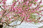 春之饗宴~2013梅峰農場~:DSC_8431.jpg