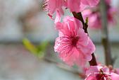 春之饗宴~2013梅峰農場~:DSC_8466.jpg