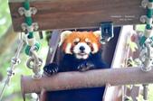 2014夏の北海道-旭山動物園、旭川:DSC_3851.JPG