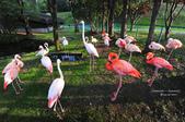 2014夏の北海道-旭山動物園、旭川:DSC_4165.JPG