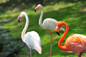 2014夏の北海道-旭山動物園、旭川:DSC_3435.JPG