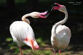 2014夏の北海道-旭山動物園、旭川:DSC_3430.JPG