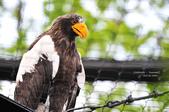 2014夏の北海道-旭山動物園、旭川:DSC_3913.JPG