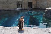 2014夏の北海道-旭山動物園、旭川:DSC_3493.JPG