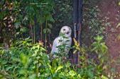 2014夏の北海道-旭山動物園、旭川:DSC_3867-1.jpg