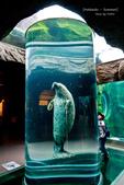 2014夏の北海道-旭山動物園、旭川:DSC_4117-1.jpg