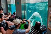 2014夏の北海道-旭山動物園、旭川:DSC_3621-1.jpg
