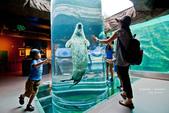 2014夏の北海道-旭山動物園、旭川:DSC_4136-1.jpg