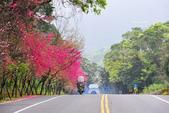 2014牛鬥櫻花:DSC_3743.JPG