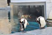 2014夏の北海道-旭山動物園、旭川:DSC_4074.JPG