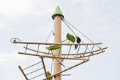 2014夏の北海道-旭山動物園、旭川:DSC_4002-1.jpg