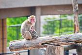 2014夏の北海道-旭山動物園、旭川:DSC_4046-1.jpg