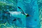 2014夏の北海道-旭山動物園、旭川:DSC_3457-1.jpg