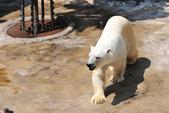 2014夏の北海道-旭山動物園、旭川:DSC_3702.JPG