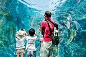 2014夏の北海道-旭山動物園、旭川:DSC_3467-1.jpg