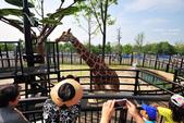 2014夏の北海道-旭山動物園、旭川:DSC_3741.JPG