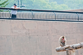 2014夏の北海道-旭山動物園、旭川:DSC_4050-1.jpg