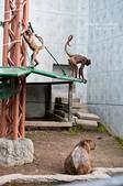 2014夏の北海道-旭山動物園、旭川:DSC_4011-1.jpg