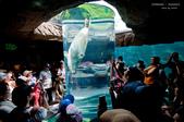 2014夏の北海道-旭山動物園、旭川:DSC_3500-1.jpg