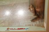 2014夏の北海道-旭山動物園、旭川:DSC_3843-1.jpg