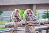 2014夏の北海道-旭山動物園、旭川:DSC_4056-1.jpg