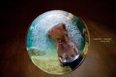2014夏の北海道-旭山動物園、旭川:DSC_3800-1.jpg