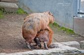 2014夏の北海道-旭山動物園、旭川:DSC_4020-1.jpg