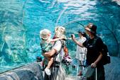 2014夏の北海道-旭山動物園、旭川:DSC_3461-1.jpg