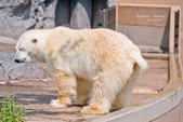 2014夏の北海道-旭山動物園、旭川:DSC_3717-1.jpg