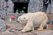 2014夏の北海道-旭山動物園、旭川:DSC_3730-1.jpg