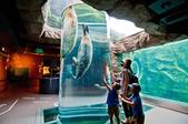 2014夏の北海道-旭山動物園、旭川:DSC_4132-1.jpg