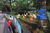 2014夏の北海道-旭山動物園、旭川:DSC_4166.JPG
