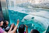 2014夏の北海道-旭山動物園、旭川:DSC_3645-1.jpg