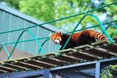 2014夏の北海道-旭山動物園、旭川:DSC_3855.JPG