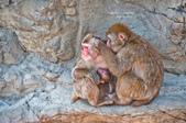 2014夏の北海道-旭山動物園、旭川:DSC_4048-1.jpg