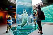 2014夏の北海道-旭山動物園、旭川:DSC_4135-1.jpg