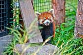2014夏の北海道-旭山動物園、旭川:DSC_3864-1.jpg