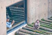 2014夏の北海道-旭山動物園、旭川:DSC_4057-1.jpg