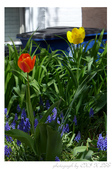 2013 Spring:P1000605.JPG