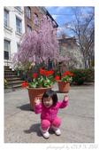 2013 Spring:P1000606.JPG