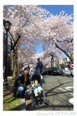 2013 Cherry Blossom(Wooster Square Park):P1000501.JPG