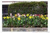 2013 Spring:P1000609_M.jpg