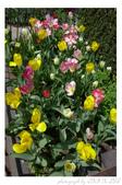 2013 Spring:P1000610.JPG